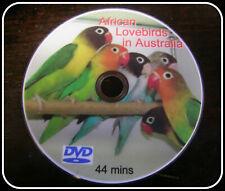 AFRICAN  LOVEBIRDS IN AUSTRALIA  DVD FREEPOST AUSTRALIA