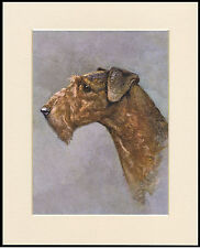 AIREDALE TERRIER DOG HEAD STUDY GREAT DOG PRINT MOUNTED READY TO FRAME