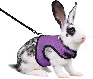 Adjustable Soft Harness With Elastic Leash For Rabbits Medium Pack of 1 NEW
