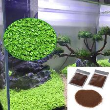 Fish Tank Aquarium Live Plant Seeds Aquatic Water Grass Decor Foreground Plant B