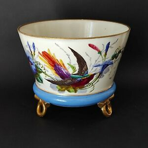 Cache-pot (cachepot - vaso) Ginori con colibrì dipinto a mano - 1860/1890