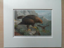 "GOLDEN EAGLE SUPERB ANTIQUE 1860 COLOUR PRINT  NEW  9""X11"" MOUNT READY TO FRAME"