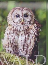 NEU Schöner Wandkalender 2020 Tiere des Waldes Waldgesichter Fotos 34 x 24 cm