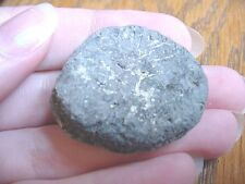 (F-309d) fossil Tortoise turtle leg spur specimen Florida rivers Pleistocene Age