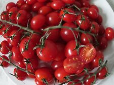 TOMATO PICCOLO - VERY SWEET, BITE - SIZED FRUITS - 75 SEEDS