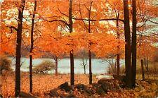 Std Chrome Postcard NC F155 Autumn in North Carolina Fall Color Trees Scenic