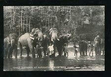 Ceylon Kandy Katugastota River Animals Temple ELEPHANTS 1954 RP PPC