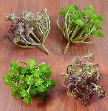 Set of 4 Ganoderma Grass Artificial Plastic Plants Fairy House Landscape