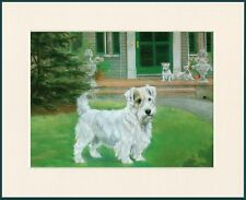 SEALYHAM TERRIER GREAT DOG PRINT MOUNTED READY TO FRAME