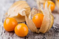 Ground Cherry Fruit *PHYSALIS* 100 Finest Fresh Seeds- Sweet Flavour -UK Seller