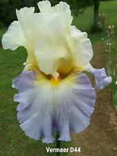 Tall Bearded Iris: Vermeer (Lowell Baumunk, 2013) Pre-Sale - Awards