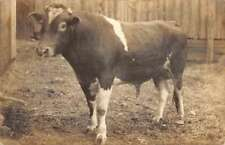 Schoharie Co New York Bull In Barn Real Photo Antique Postcard K93628