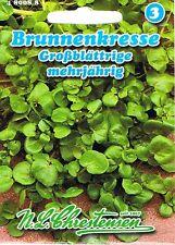 480088 Brunnenkresse großblättrige Kresse Saatgut Samen Sämereien Kräuter