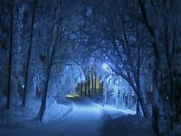 PHOTO PAINTING DIGITAL WINTER FOREST PATH 18X24 '' POSTER ART PRINT GIFT LF046