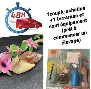 kit Complet Vivarium 39 x 29 x 11 CM + 2 Escargot ACHATINA (african snail)
