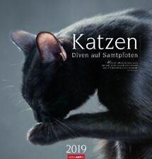 Katzen 2019 (Kalender) NEU
