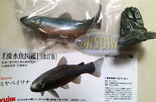 yujin原色淡水魚圖鑑capsule Freshwater Aquarium anabantid fish sp Salvelinus malma malma