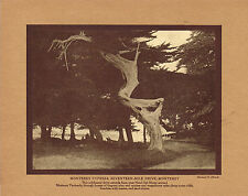 Antique 17 Mile Drive California Cypress Tree Hermann Albrecht Photo Print