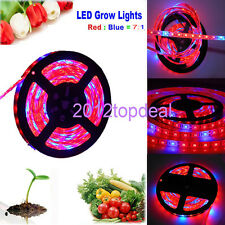 5M LED 5050 Strip Light Red Blue 7:1 For Plant Grow Flower Strip Lamp 12V IP65