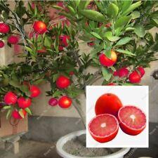 20 Pcs Red Lemon Seeds Drawf Tree Bonsai Organic Fruit Seeds