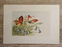Künstler AK Schmetterling Blumen Gräser 1950-60er Schmetterlinge Insekten