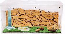 Hormiguero Educativo - Granja de Hormigas con Reina Gratis (Anthouse.es)