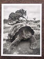 Tortuga Sebastiao Salgado impresión Genesis Galápagos Ecuador fotografía gigante