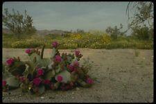 196007 Springtime In The Sonoran Desert A4 Photo Print