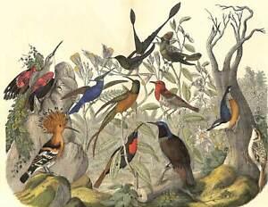 1868 HUMMINGBIRDS HOOPOE WOOD NUTHATCH WALLCREEPER Hand Color FOLIO Print Kolb