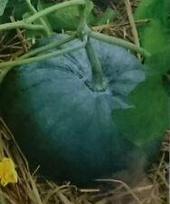 Bangladeshi HybridF1Sweet Pumpkin Seeds - Misti Kumra Beej - Thai Asian Pumpkin