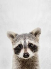 CUTE BABY RACCOON * LARGE A3 SIZE QUALITY CANVAS PRINT