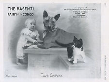 """BASENJI OUR DOGS 1951 DOG BREED KENNEL ADVERT PRINT PAGE """"FAIRY OF THE CONGO"""""""