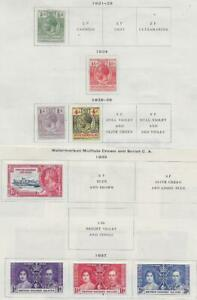 8 British Solomon Islands Stamps from Quality Old Antique Album 1921-1937