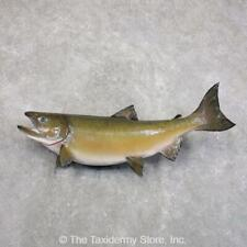 "#22288 E+ | 333.5"" Coho Salmon Taxidermy Fish Mount For Sale"