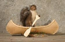 Canoeing Rowing Squirrel Taxidermy Animal Statue on Base Home or Office Gift
