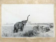 Gravure CHASSE Une chasse à l'éléphant à la baie de Sainte-Lucie 1846 F. Grenier