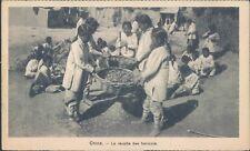 CHINA Belgian mission bean harvesting 1910s PC