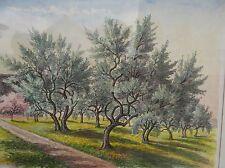 "Albert Weisskopf (1900-1983) "" Olivenhain"" Aquarell, ger/Glas, RG 45x53 cm"