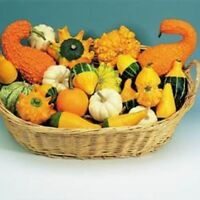 Gourd - Improved Ornamental Mixed - 40 Seeds