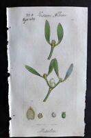 Sowerby C1805 Hand Col Botanical Print. Misseltoe 1470