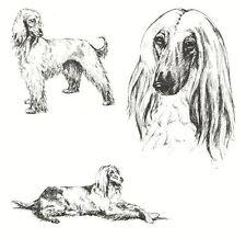 Afghan Hound - 1963 Vintage Dog Print - Matted *