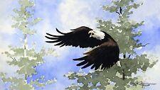 AMERICAN BALD EAGLE Wildlife Art Print Signed by Artist DJ Rogers w/COA
