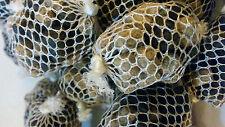20 filled pva mesh balls + 50ml halibut glug + 80grms halibut boilies 10 pva bag