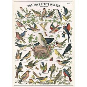 "Decorative Paper- Bird Chart Sheet 20"" x 28"" Wall Poster Kids Education"