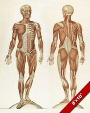 HUMAN ANATOMY MUSCULAR SYSTEM MEDICAL DRAWING PAINTING ART REAL CANVAS PRINT