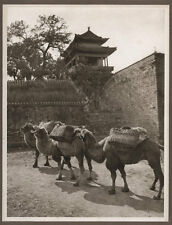 1920's CHINA GRAVURE PAGEANT OF PEKING DONALD MENNIE - CAMEL STUDY