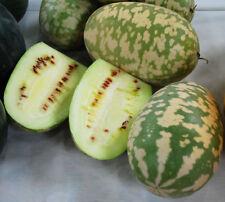 1200 semi .. un mouthtrembling mix di insalata FOGLIE Mesclun-Senape MEGA-MIX