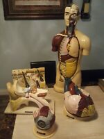 Rare Massive Collection  Vintage 1964 Nystrom Anatomy Models Head torso and more