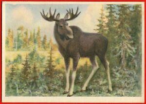 1960 ELK Moose handsome Wild animals ART VATAGIN Old Soviet Russian postcard VT