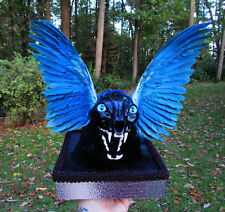 Real lynx skull with lighted eyes and wings goth fantasy taxidermy